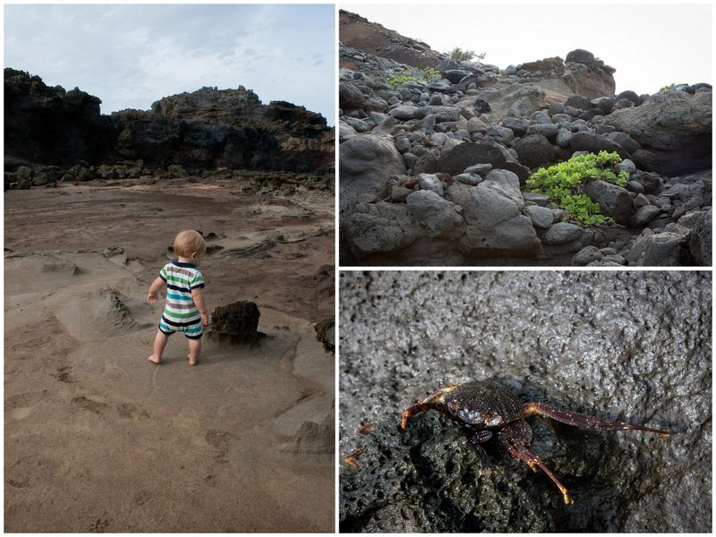 Nakalele Point, blowhole, ocean, lava, maui, hawaii, hike